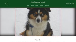 Little Ponderosa Kennels | Boarding