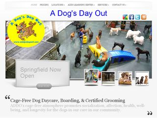 A Dogs Day Out | Boarding