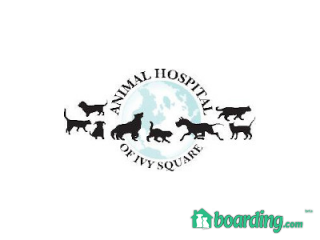 Animal Hospital of Ivy Square | Boarding