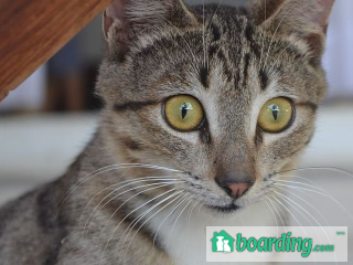 Cat Sitting In Your Home | Boarding