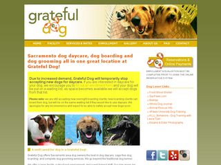 Grateful Dog Daycare | Boarding