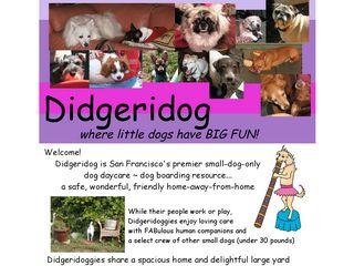 Didgeridog San Francisco