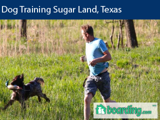 Dog Training Sugar Land, TX | Boarding