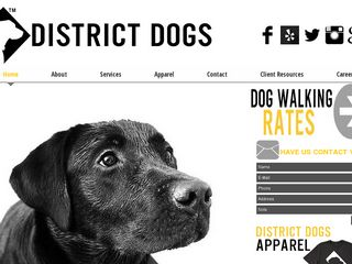 District Dogs | Boarding