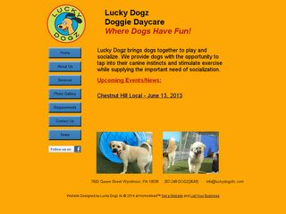 Lucky Dogz Doggie Daycare Wyndmoor