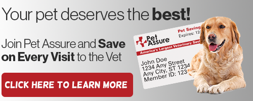 Join Pet Assure and save on every Visit to the Vet